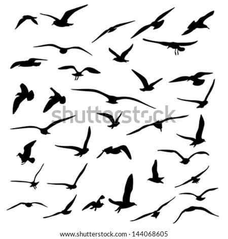 stock-vector-gull-silhouette