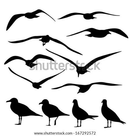 gull silhouette  vector
