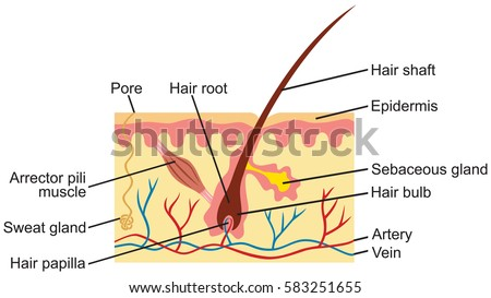 Royalty Free Structure Coral Polyp Coral Anatomy 168497918 Stock