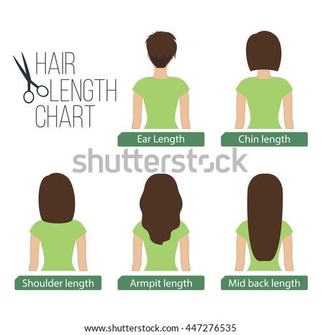 Hair length chart back view. Vector.