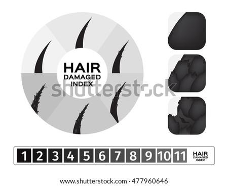 hair vector   damaged hair