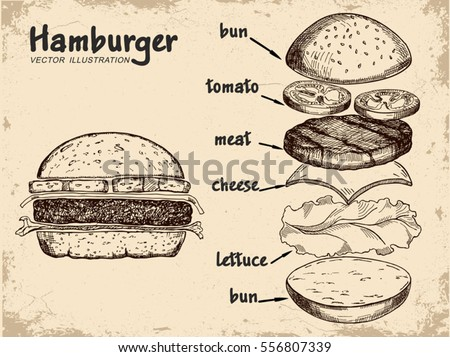 Hamburger ingredients with meat, cheese, tomato, salad, bun,  and lettuce. Classic burger isolated on a white background. Big hamburger with ingredients. Hamburger ingredients with text.