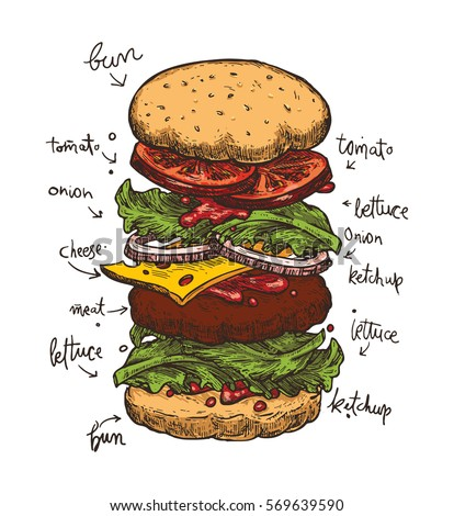 Hamburger ingredients with meat, cheese, tomato, salad, bun, ketchup and lettuce. Classic burger isolated on a white background. Big sandwich with ingredients. Colorful vector illustration.