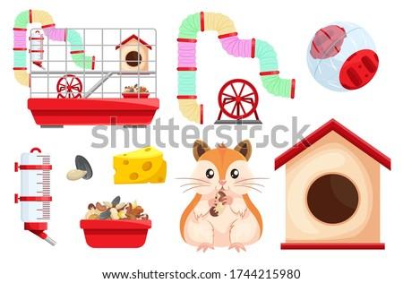 hamster habitat  accessories