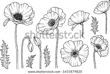 Hand darwn vector poppy flower. Eps 10 illustration. Poppy drug icon. Isolated on white background. Dooodle drawing. Floral design. Line-art Сток-фото ©