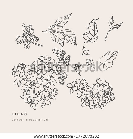 hand draw vector lilac flowers