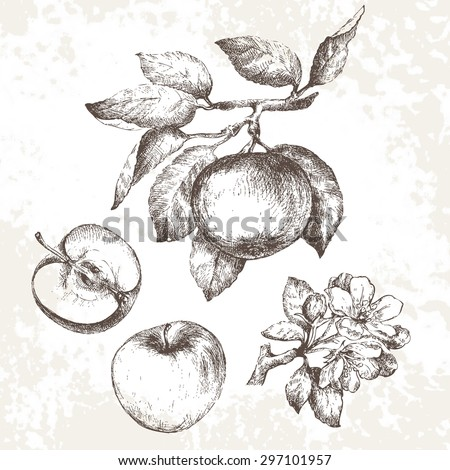 hand drawing apples on apple