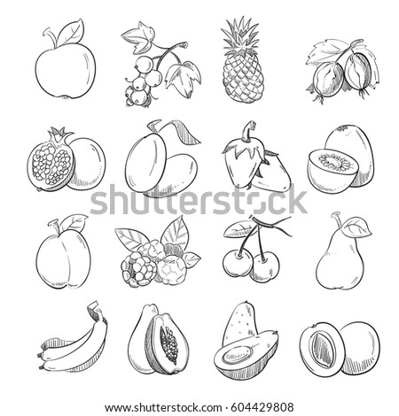 Hand drawing doodle fruits vector illustration for fruit packaging. Harvest fruit and healthy plant graphic #604429808