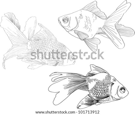 hand drawing gold fishes over