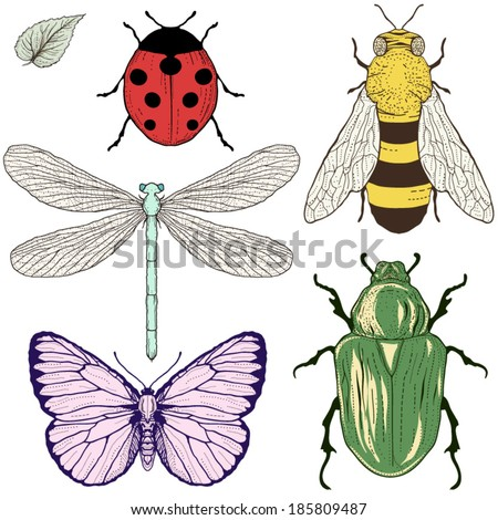 hand drawing insects set vintage engraving style