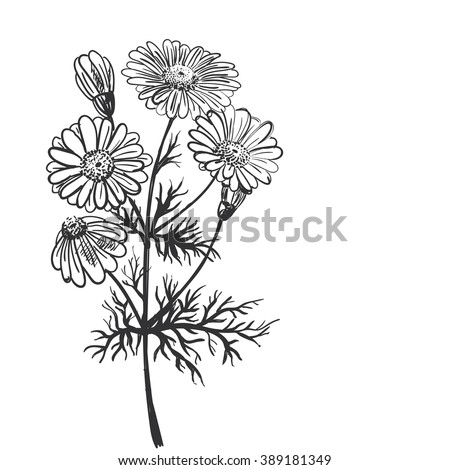 flower pharmaceuticals The swiss food company known as nestlé is now seeking a patent on nigella sativa, commonly known as fennel flower, black seed or black cumin this singular herb has been known to treat everything from fevers to skin rashes it has been used for centuries in impoverished countries throughout.