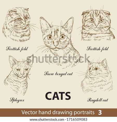 hand drawing set of a purebred