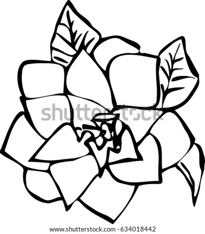 Hand drawing single flower isolated on white background .Vector.Template illustration for card. Black  and white contour simple sketch.