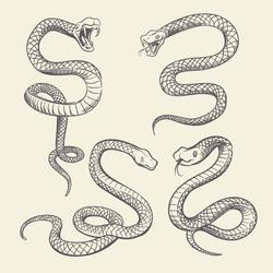 Hand drawing snake set. Wildlife snakes tattoo vector design isolated. Wild snake poisonous sketch, dangerous animal reptile illustration