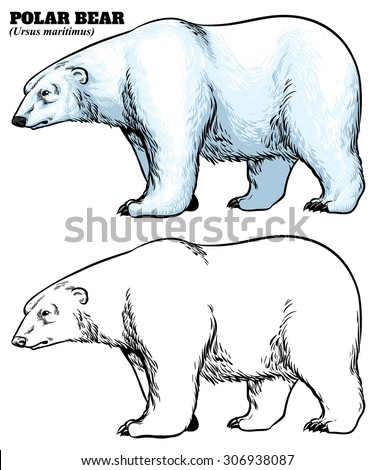 hand drawing style of polar bear