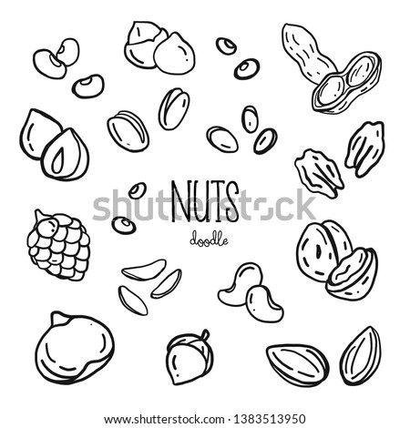 Hand drawing styles with nuts. Nuts doodle.
