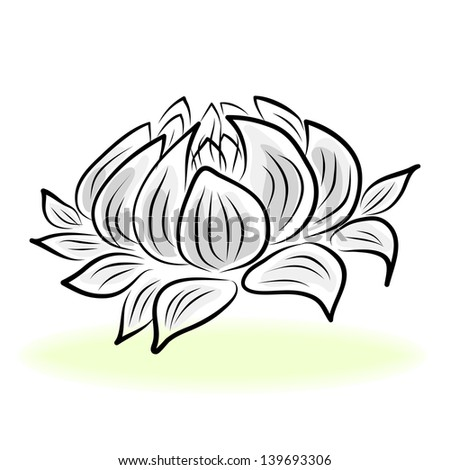 Lily Plant Drawing Hand Drawing Water Lily Lotus
