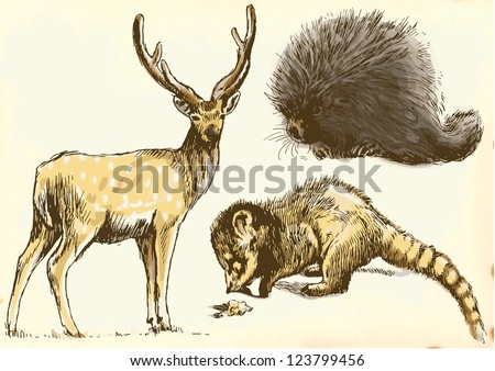 Hand drawings - Deer, Coati, Porcupine - Description: Collection of drawings (each on a separate layer) on vintage paper in yellow color (the paper is separated in the lower layer).