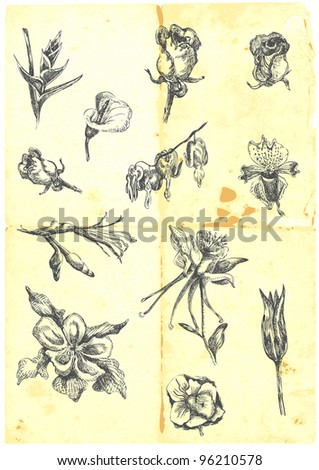 Hand drawn a large collection of different flowers. Lilies, roses, daffodils, etc. ( Detailed and precise work. )