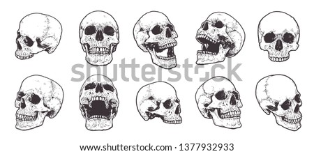 hand drawn anatomical skulls