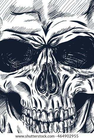 hand drawn anatomy skull with