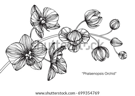 Hand drawn and sketch Fuchsia flower. Black and white with line art illustration. #699354769