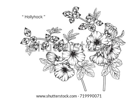 Hand drawn and sketch Hollyhock flower. Black and white with line art illustration. #719990071