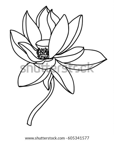Hand drawn and sketch lotus flower ez canvas hand drawn and sketch lotus flower mightylinksfo