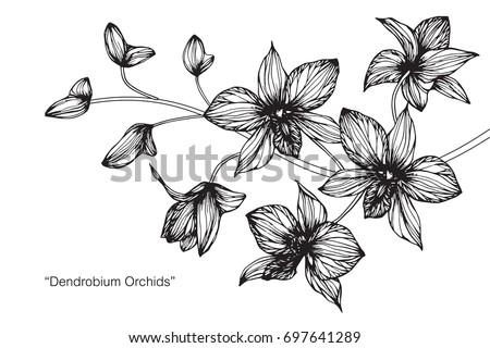 Hand drawn and sketch Orchid flower. Black and white with line art illustration. #697641289