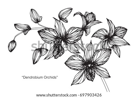 hand drawn and sketch orchid