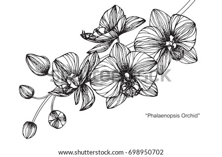 Hand drawn and sketch Orchids flower. Black and white with line art illustration. #698950702