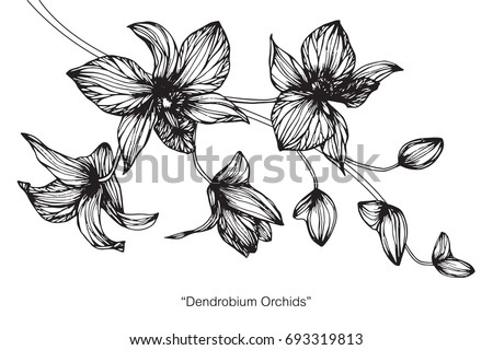 Hand drawn and sketch with Orchid flower. Black and white line art illustration.