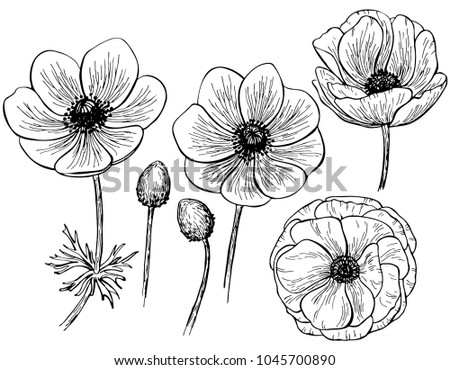 Hand drawn anemone flower isolated on white background. Set of elements. Vector illustration. Perfect for invitation, greeting card, fashion print, banner, poster for textiles, design, coloring book. #1045700890