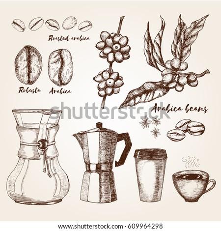 hand drawn arabica and robusta...