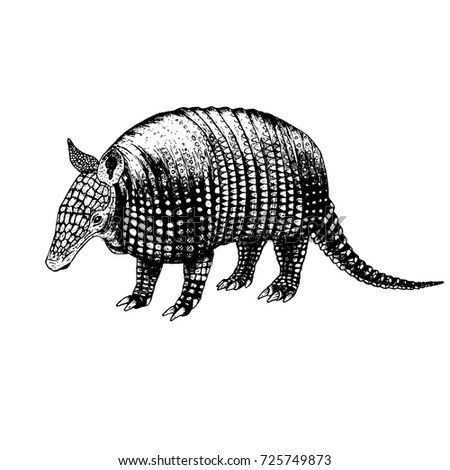 Hand drawn armadillo. Retro realistic animal isolated. Vintage style. Doodle line graphic design. Black and white drawing mammal. Vector sketch.