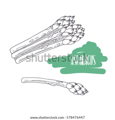 Hand drawn asparagus isolated on white. Sketch style vegetables with slices for market, kitchen or food package design. Vector illustration