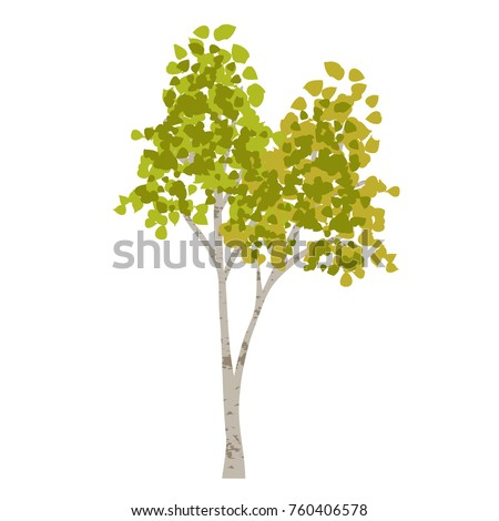hand drawn aspen birch vector