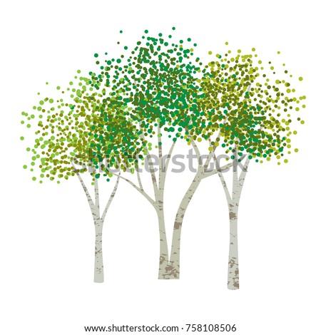hand drawn aspen birch vector trees clipart