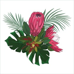 hand drawn australian native flower red protea in vector seamless pattern