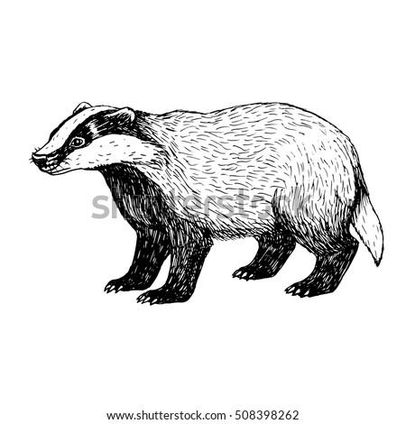 hand drawn badger retro sketch
