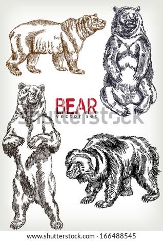 vintage standing bear illustration bigking keywords and pictures
