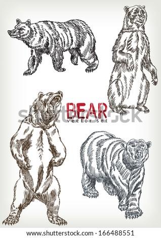 hand drawn bear vector set