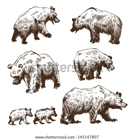 Hand drawn bears set