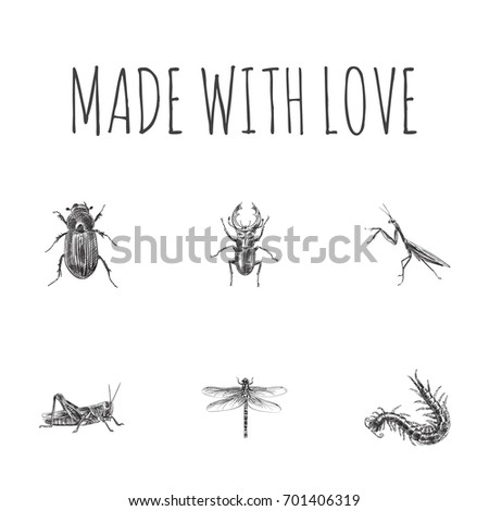 Hand Drawn Beetle Sketches Set. Collection Of Worm, Mantis, Ground Beetle And Other Sketch Elements. #701406319