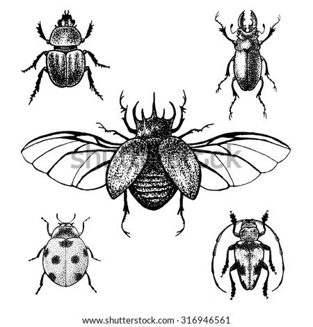 hand drawn beetles set black