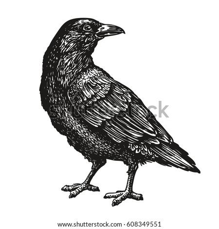 hand drawn black crow raven