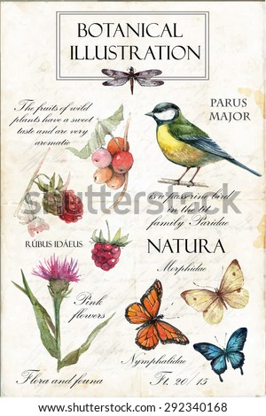 Hand drawn botanical illustration in vintage style.Vector set of watercolor hand drawn berries, herbs,titmouse, butterflies,raspberry and pink flower Isolated on vintage background