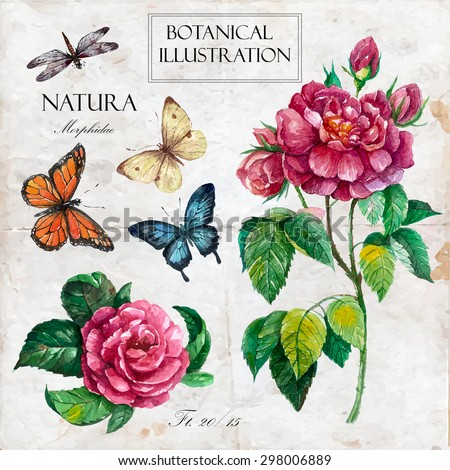 Hand drawn botanical illustration in vintage style.Vector set of watercolor hand drawn roses, butterflies, dragonfly Isolated on vintage background  with letters and text.