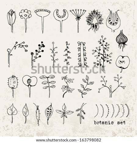 hand drawn botanical set