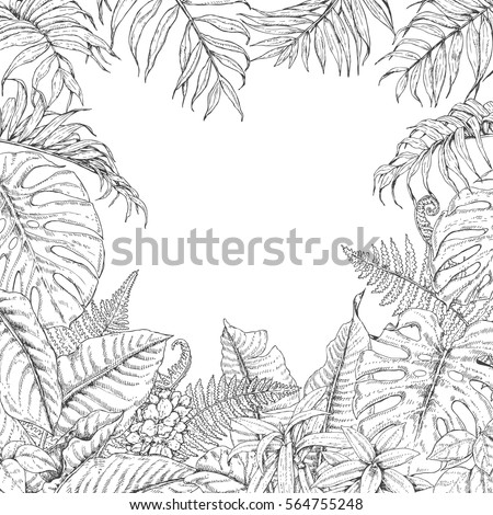 monstera tropical plant vector illustration coloring book